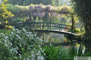 Giverny el puente y la glicina