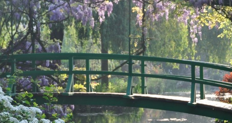 Giverny, puente y glicina