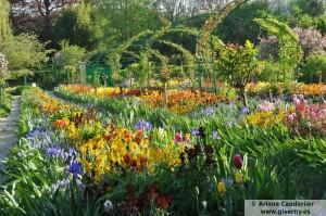 Jardin de flores de Monet, tulipanes