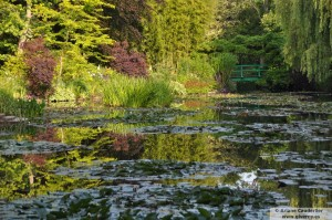 Giverny Francia Estanque de los nenufares de Claude Monet en junio