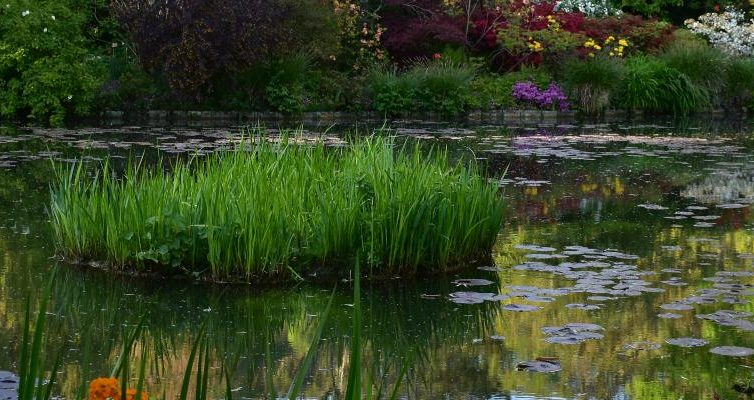 Giverny el jard n de claude monet en giverny francia for Estanque acuatico